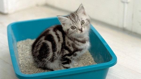 Как приучить маленького котенка ходить в лоток